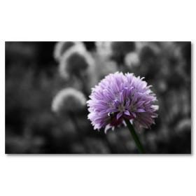 Αφίσα (μωβ, λουλούδι, μαύρο και λευκό, άσπρο)